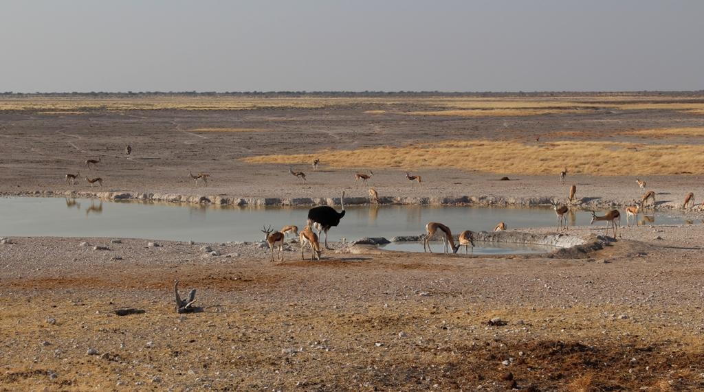 Namibia | Etoschapark Wasserloch
