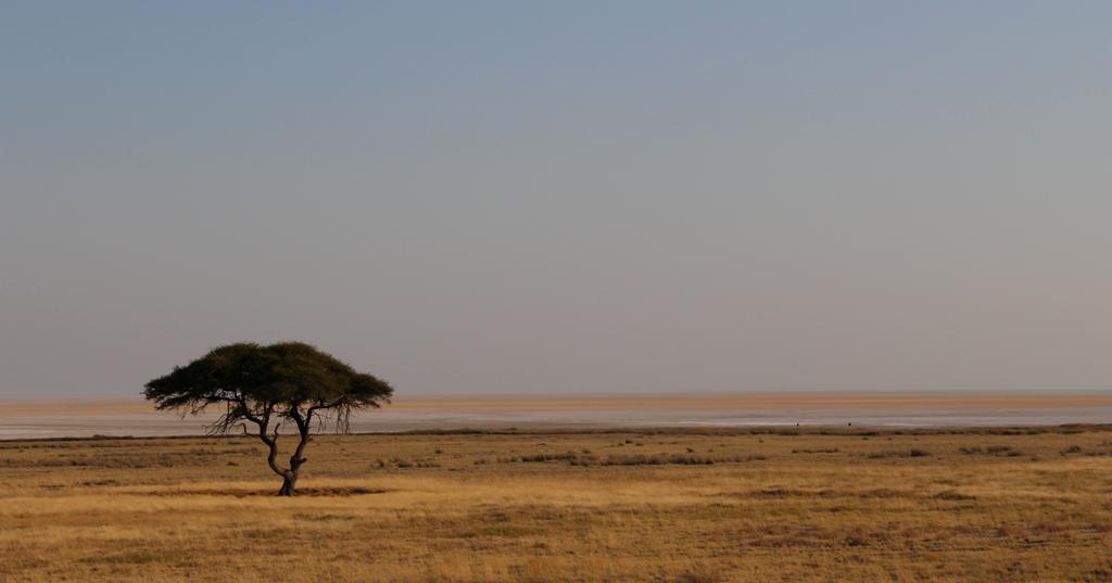 Namibia | Etoschapark