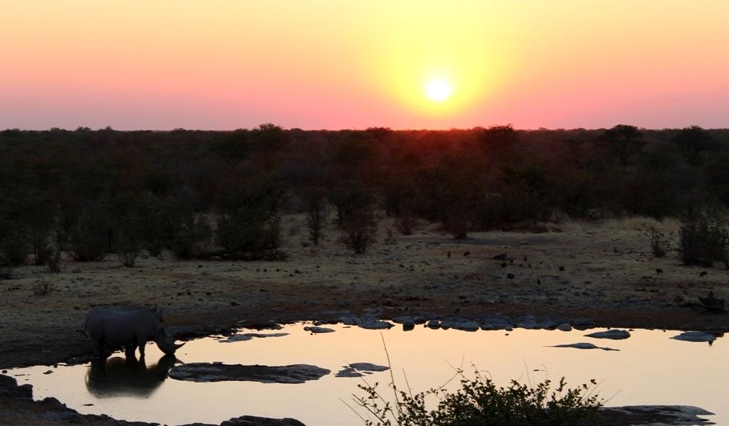 Namibia | Wasserloch Halali mit Rhinos
