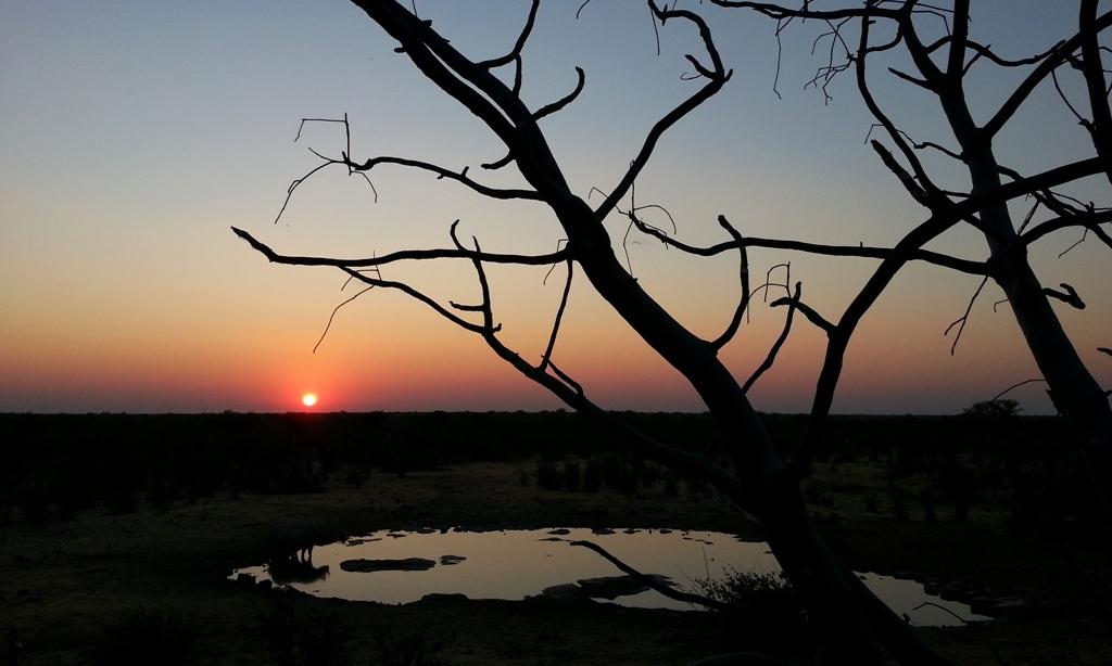 Namibia | Etoschapark Halali