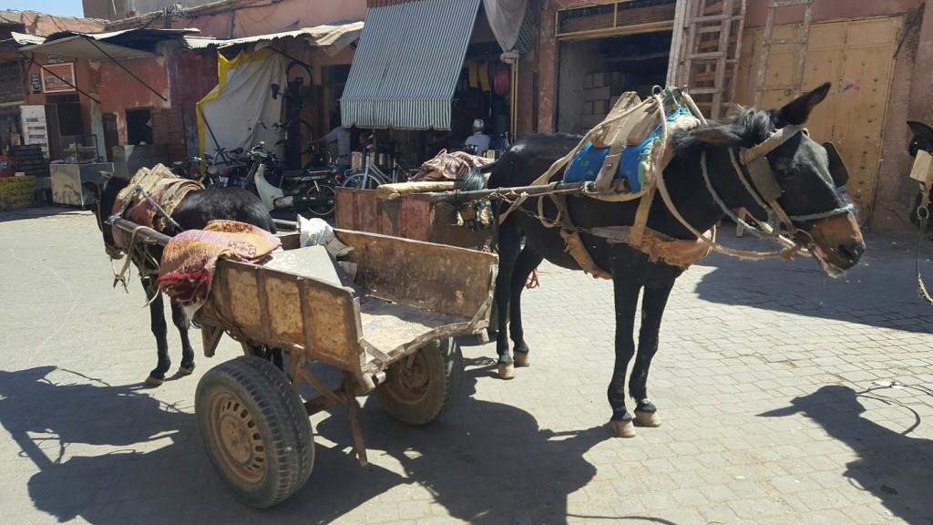 Marrakech | Place Moukef