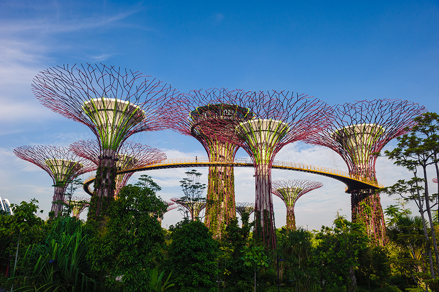 Gardens by the Bay - Overview of Supertrees with Greenery below