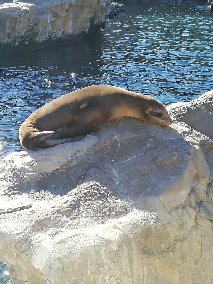 Sea World Orlando | Seelöwen