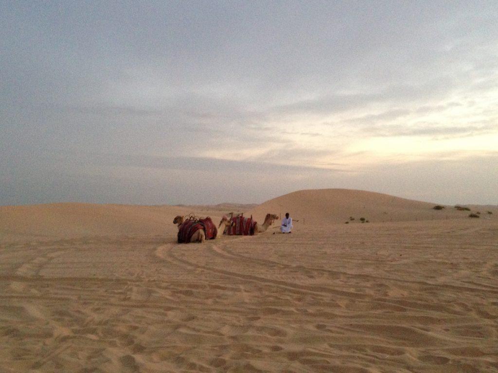 Kamele in der Wüste von Abu Dhabi