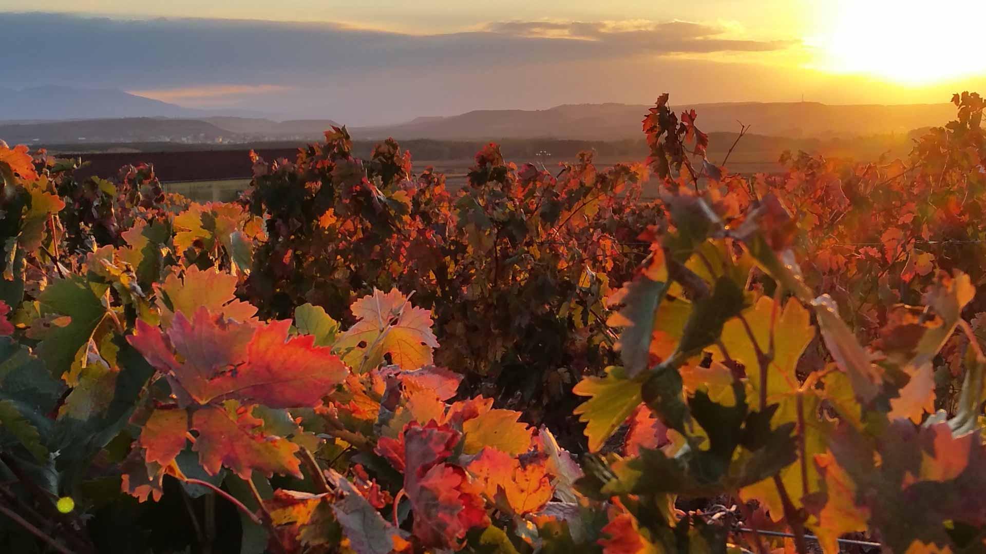 Die Weinberge von Rioja