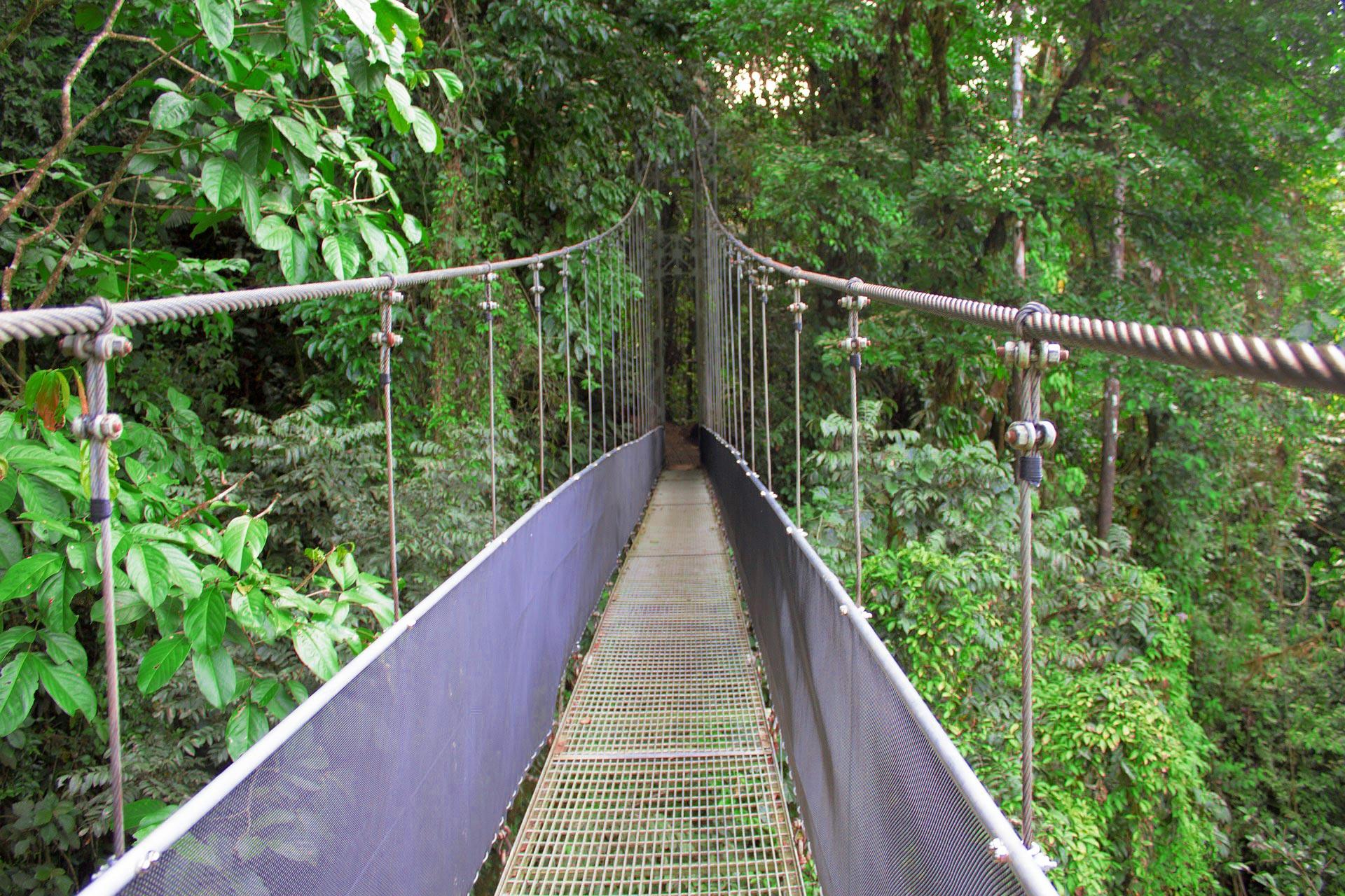 Regenwald Costa Rica