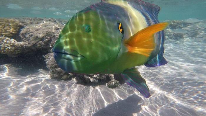 Bunter Fisch in Ägypten