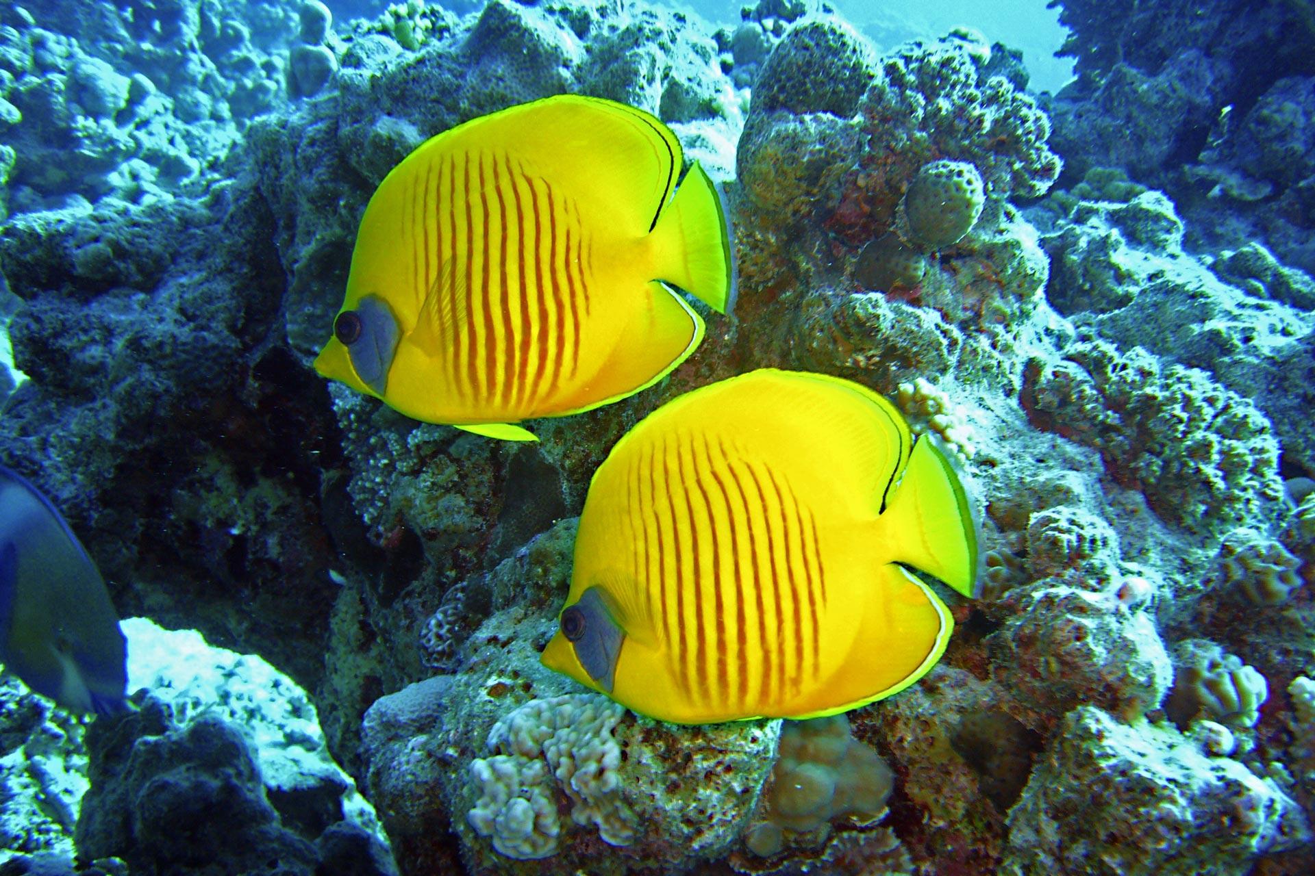 Tauchen im Riff
