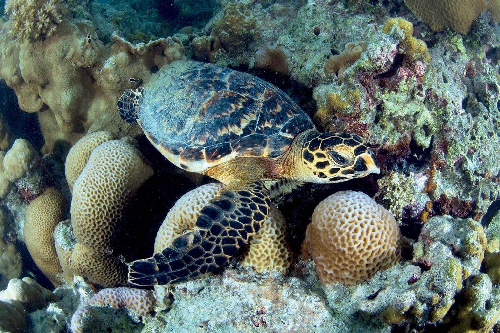 Unterwasserwelt -Desroches Island