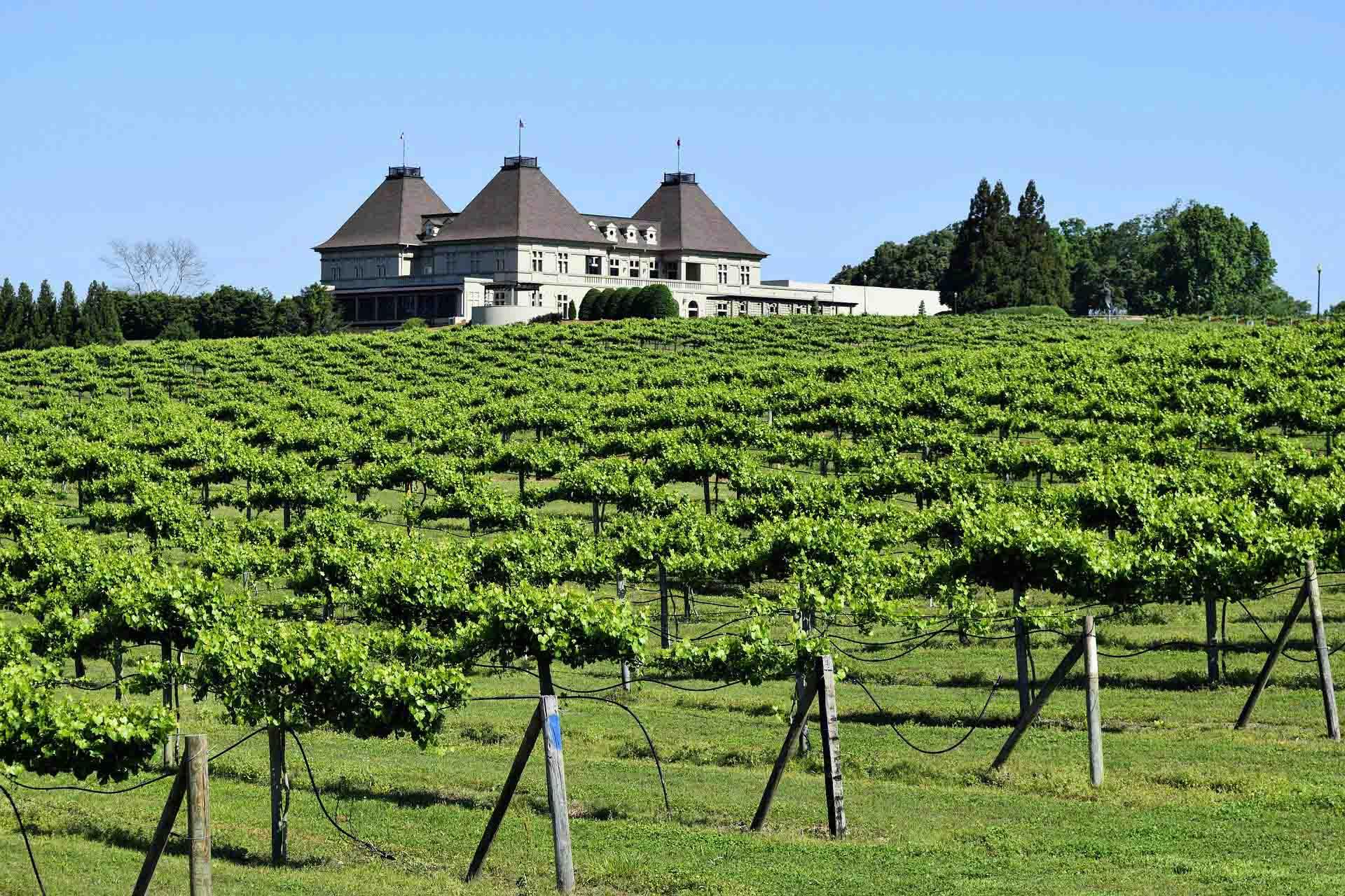 Weinbau in Georgien