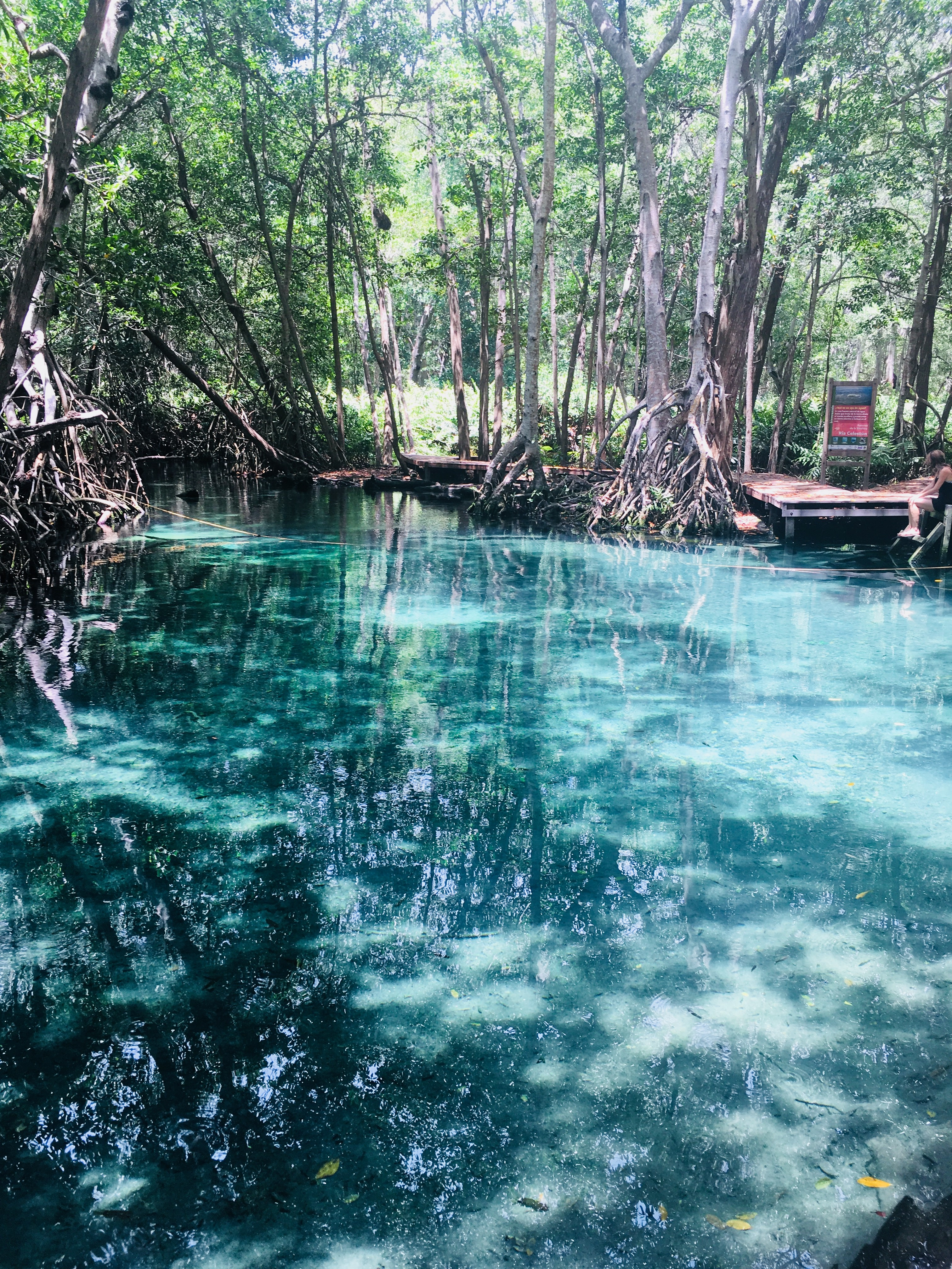 Süßwasserquelle in Celestun