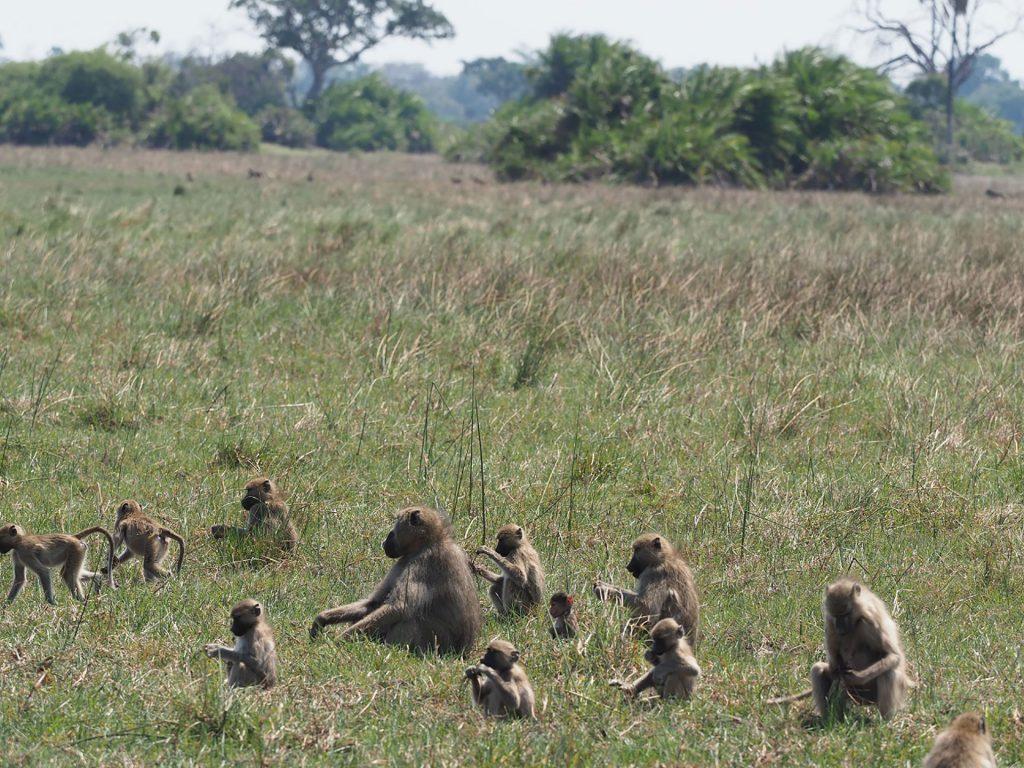 Affen Familie