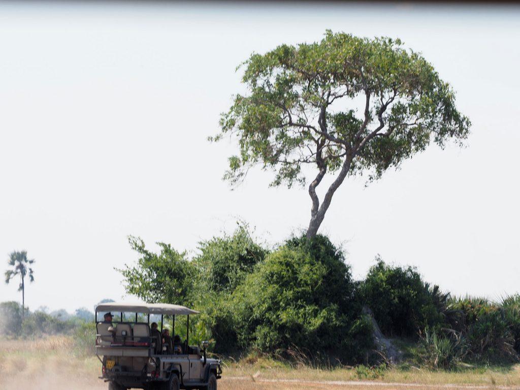 Mit dem Jeep durchs Gebüsch