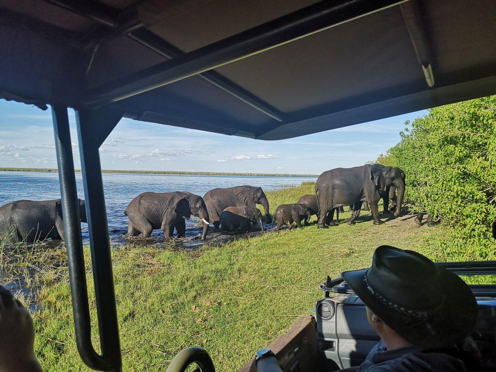 Elefanten Herde