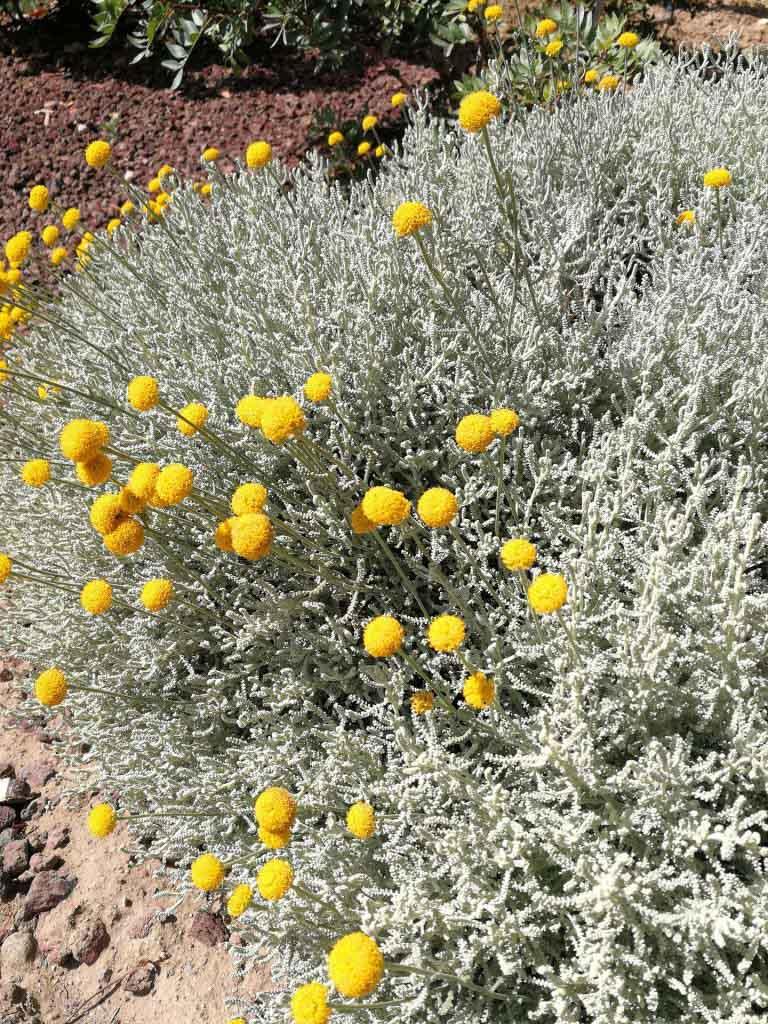 Blumensträucher