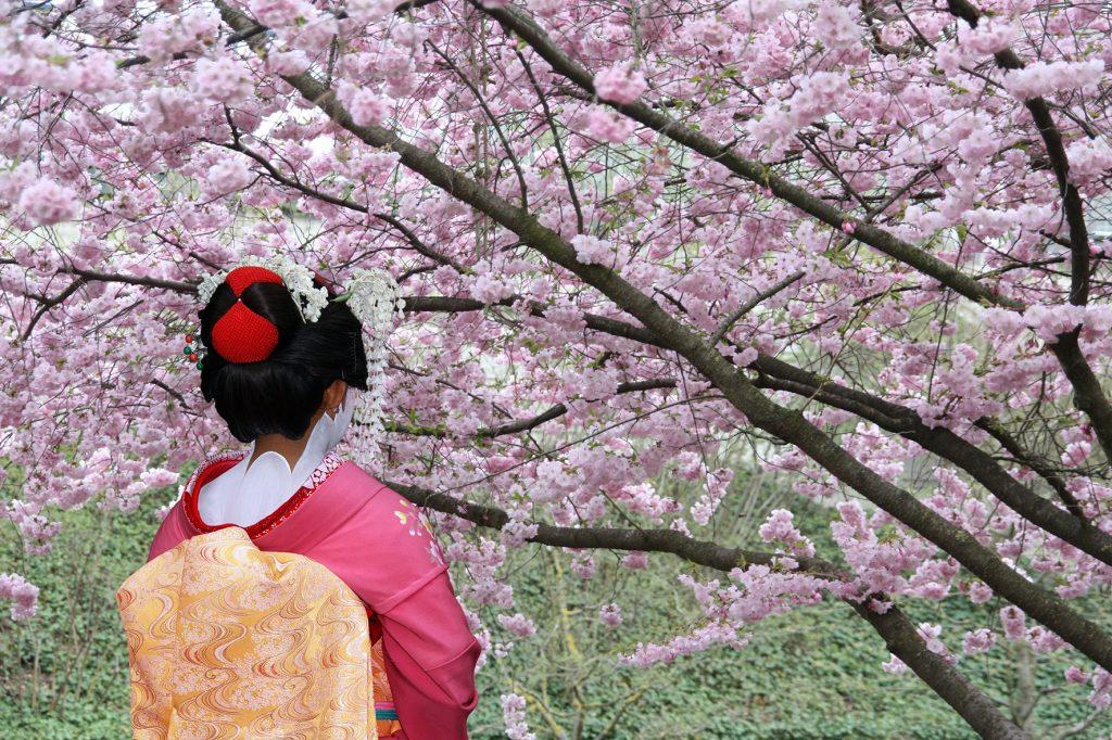 Geisha mit Sakurabaum