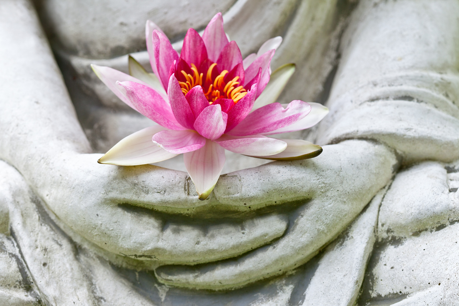 Buddah Blume