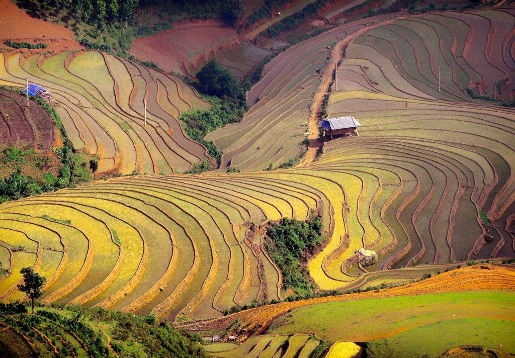 Terrassen Reisfelder