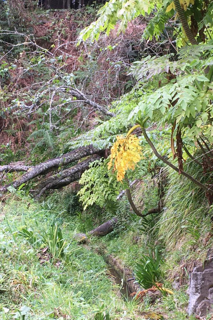 Verwunschene Wälder auf Madeira